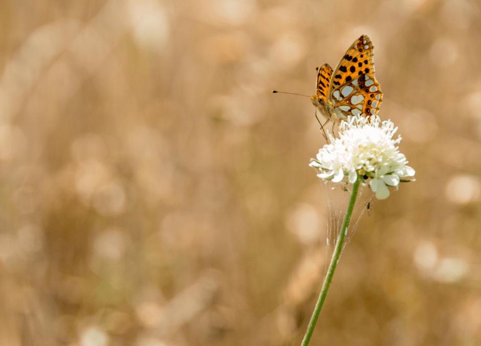 Saarbrücken blüht – Für mehr Blühflächen auf städtischem Grund