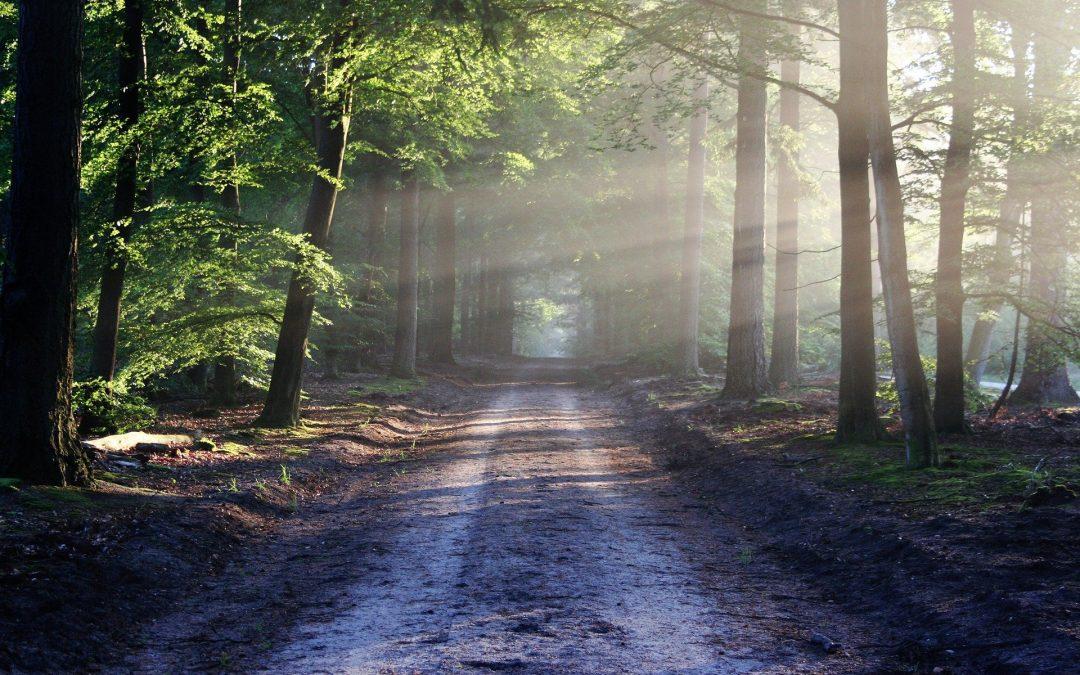 Städtische Wälder erhalten – Förderprogramme nutzen